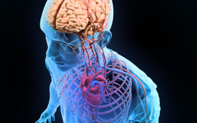 The Physiology of Chronic Pain